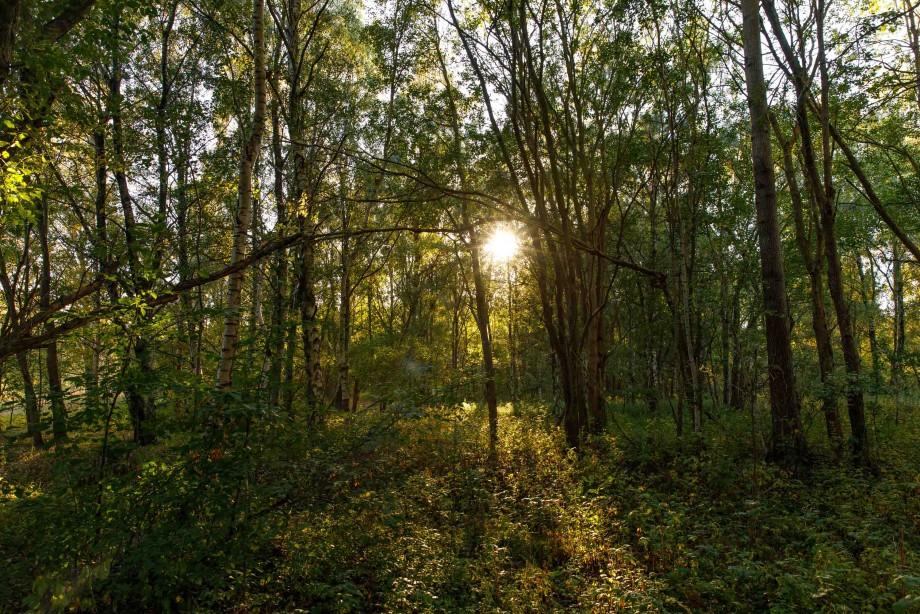 Nervgift kan radda skogen